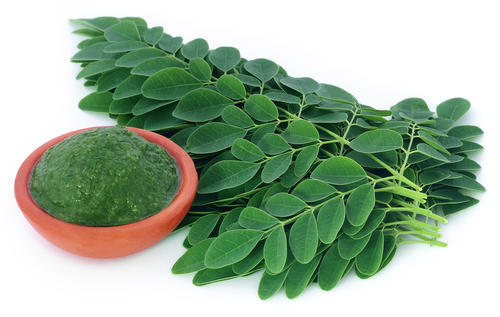 moringa-leaves-500x500